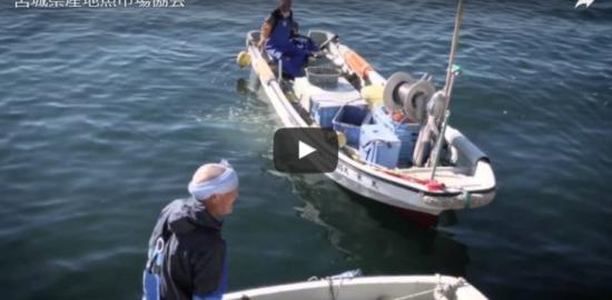 産地魚市場協会