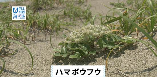 宮城県-A・09-s01